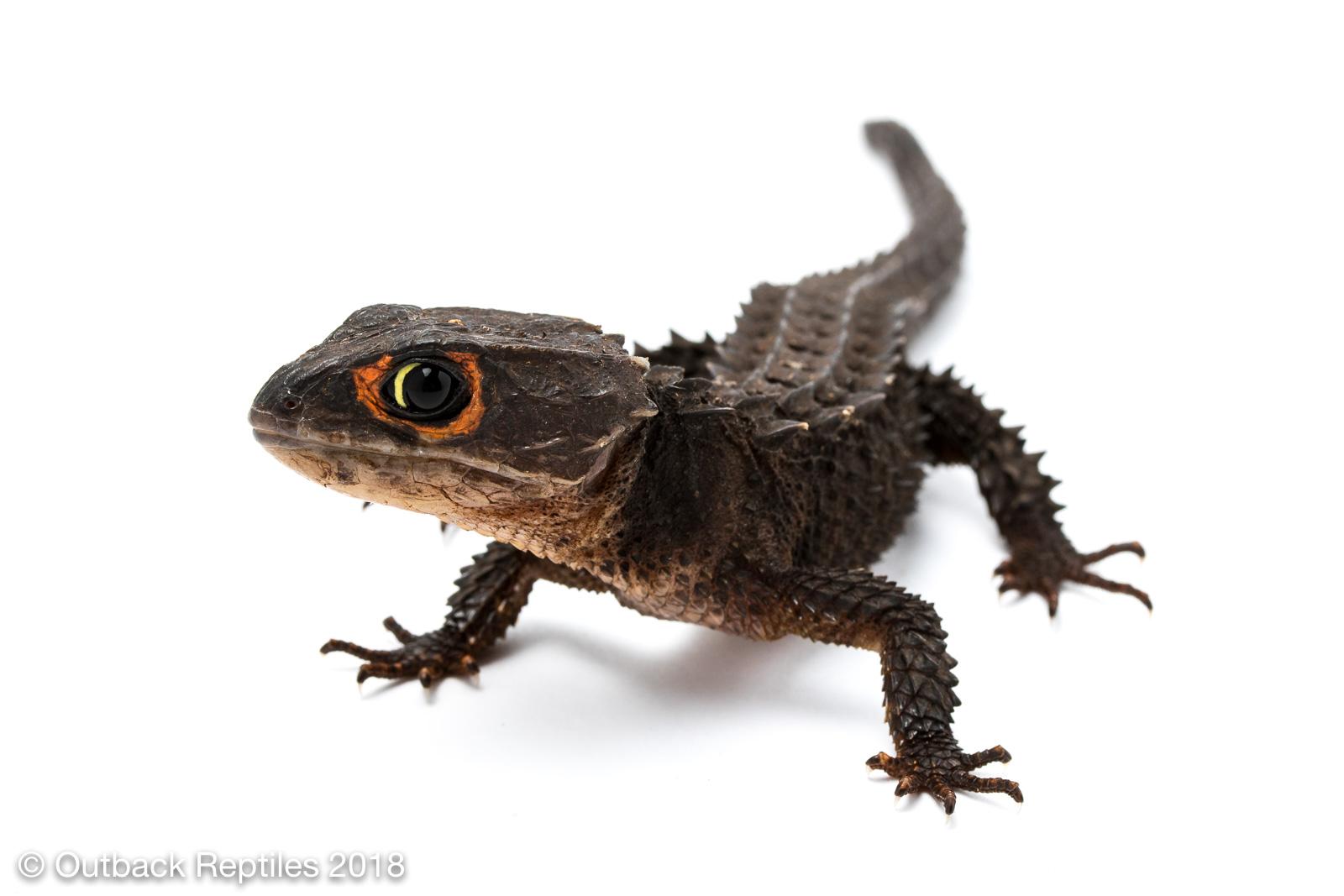 Crocodile Skink Crocodileskink - No Security - Betray - Med Vilken Rätt