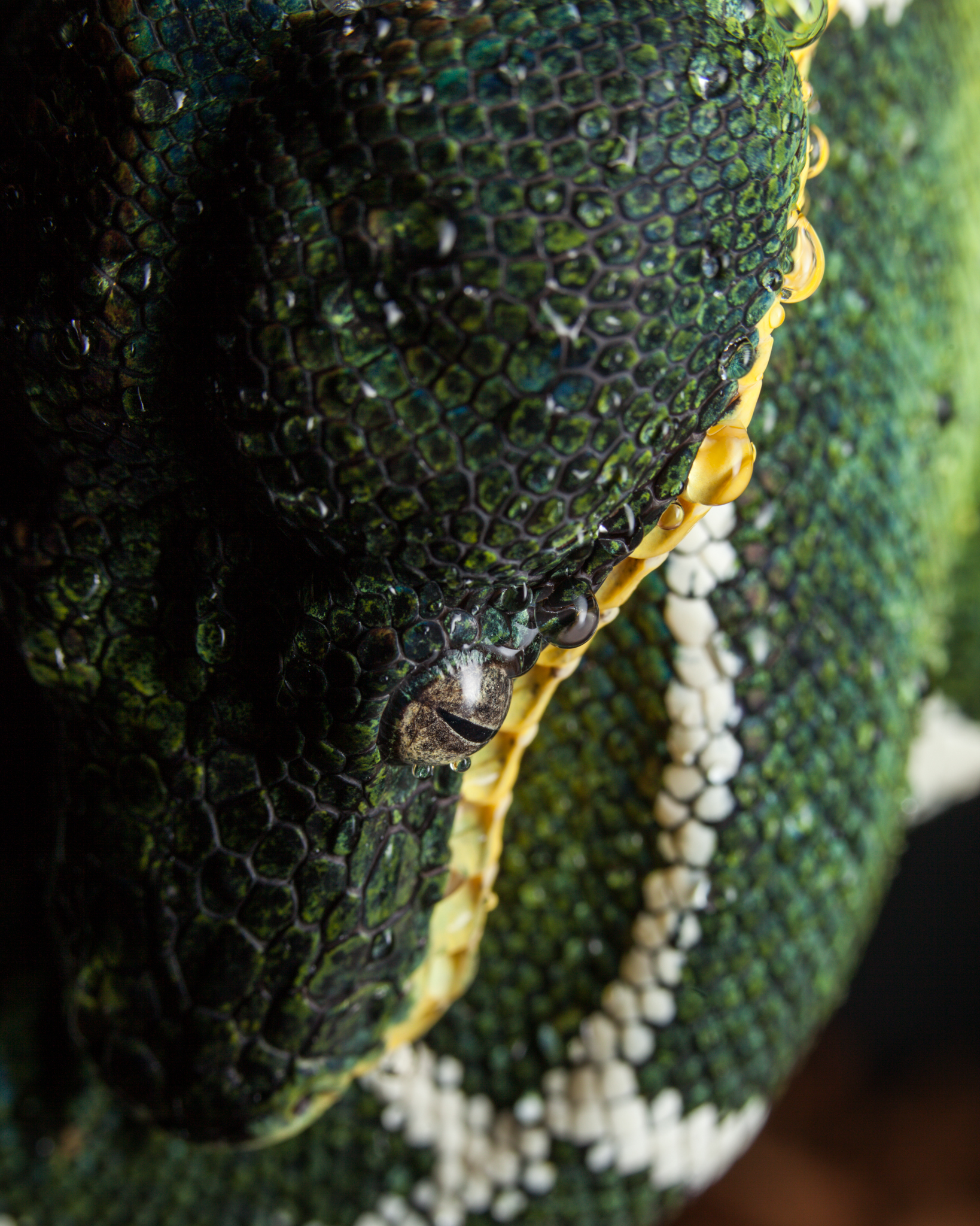 Macro Lens for Reptile Photography
