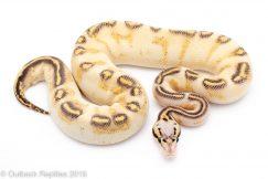pastel highway ball python