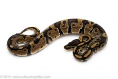 Outback Reptiles - Your Reptile One Stop Shop!