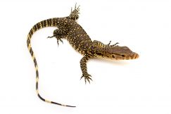 water monitor for sale